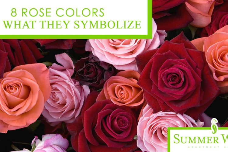 8 Rose Colors and What They Symbolize