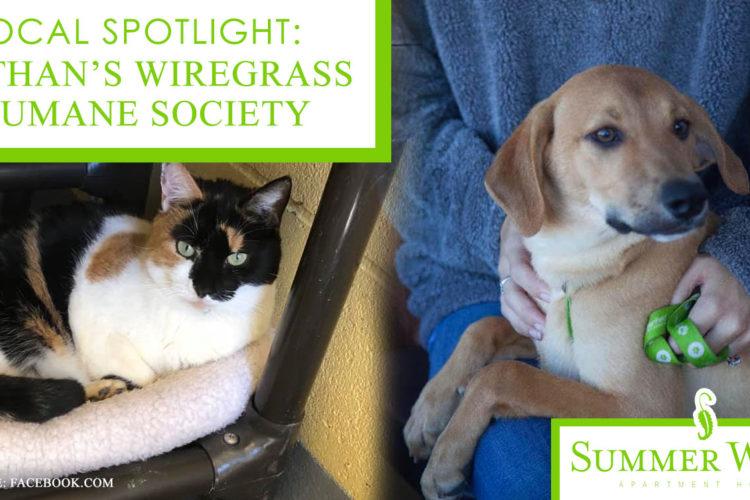 Local Spotlight: Dothan's Wiregrass Humane Society