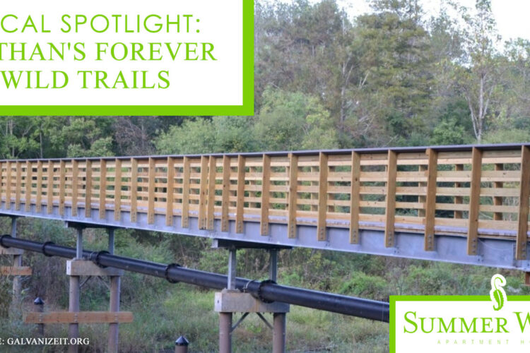 Local Spotlight: Dothan's Forever Wild Trails