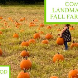 Landmark Park's Fall Farm Day 2020