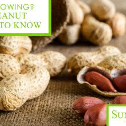 U.S. Peanut Varieties to Know