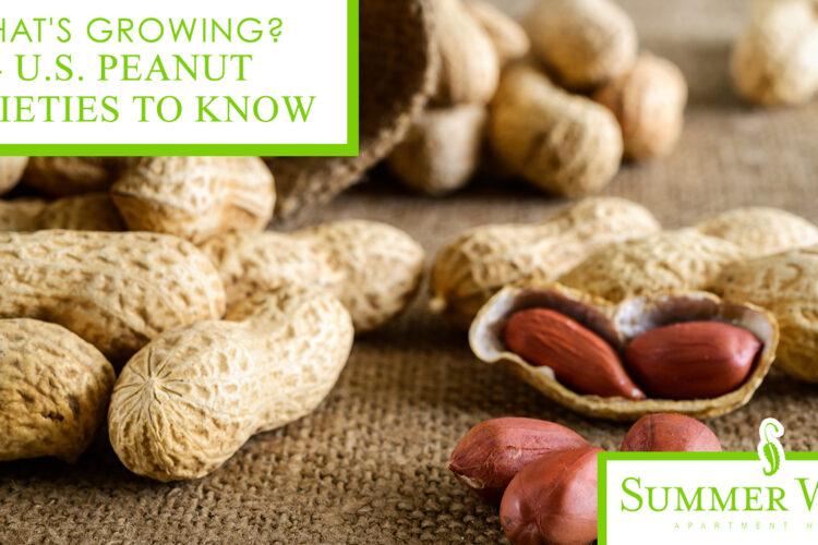 What's Growing? 4 U.S. Peanut Varieties to Know